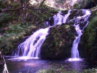 Las aguas de la vida